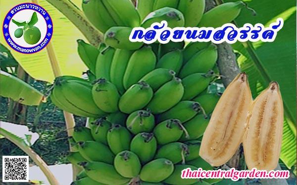 กล้วยนมสวรรค์