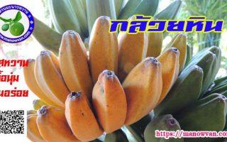 กล้วยหิน