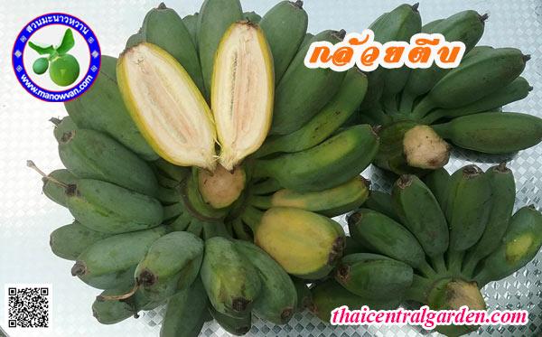 กล้วยตีบ